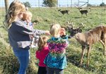 Farm families raising deer, elk.